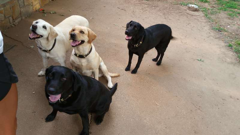 Lab Girls - Sit Stay Play - Dog Walking and Pet Sitting in Tulsa Oklahoma