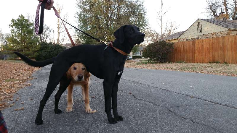 Penny and Norman - Sit Stay Play - Dog Walking and Pet Sitting in Tulsa Oklahoma