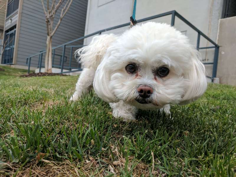 Spike - Sit Stay Play - Dog Walking and Pet Sitting in Tulsa Oklahoma