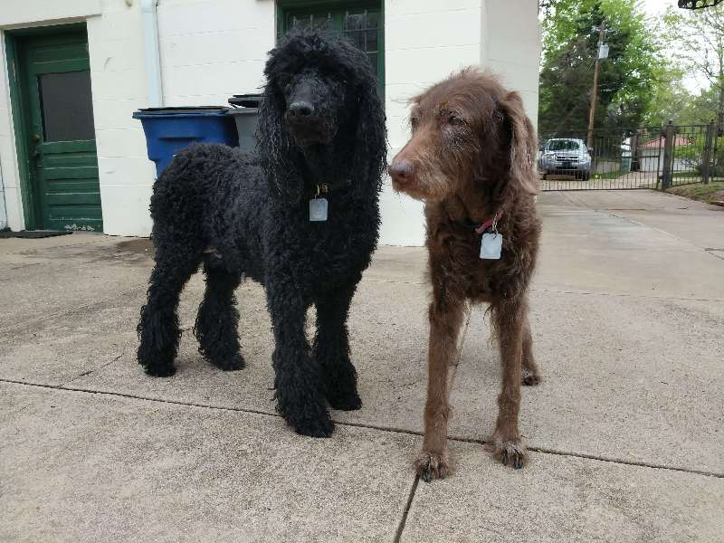 Tux and Maggie - Sit Stay Play - Dog Walking and Pet Sitting in Tulsa Oklahoma