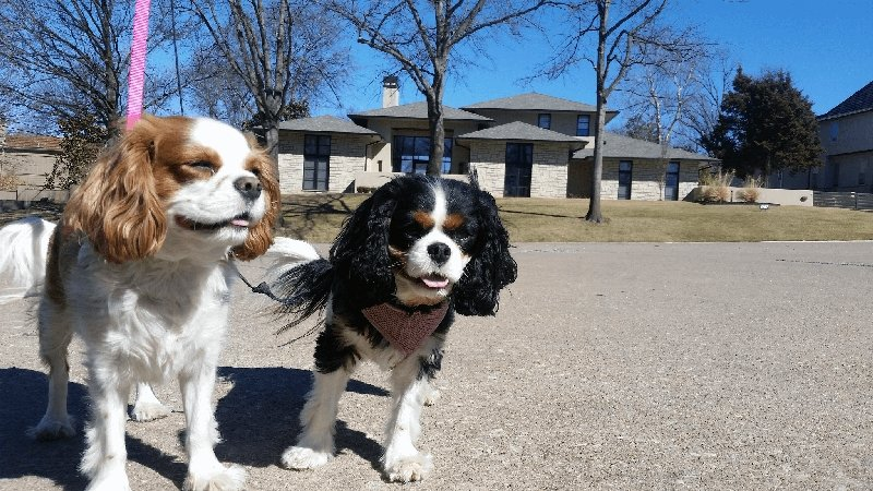 Willy and Rosie - Sit Stay Play - Dog Walking and Pet Sitting in Tulsa Oklahoma