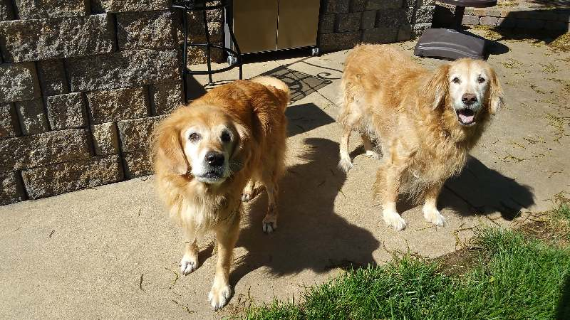 Wrangler and Poppy - Sit Stay Play - Dog Walking and Pet Sitting in Tulsa Oklahoma